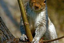 Animals - Allatok vegyesen _ Animale