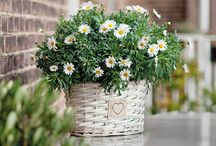 Voorjaarsbloeiers / Prachtige planten voor in de tuin