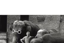 Mondadori Portfolio on Pinterest