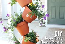 Potting ideas for height