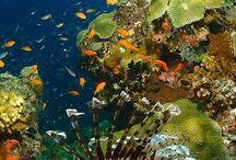 Jenaya-The Great Barrier Reef