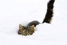 Feline Frenzy  / by Sally Williams