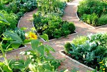 garden beds and paths  / by Robin Durham