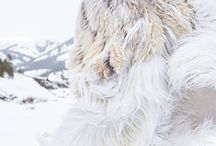 ..::..Furs..::..
