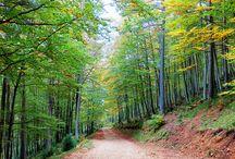 """Destins naturals / Espais on poder viure """"in situ"""" la Gimcana Natura"""