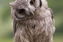 All about owls / by Jan Soine