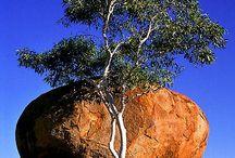 AUSTRALIA / BEAUTIFUL