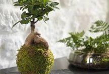 DIY : Déco végétale