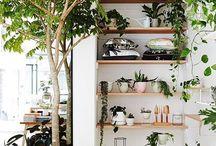plants / location of plants