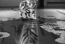 cat and tiger image