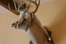 Cute animals / by Abby Huffer