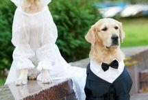 Mascotas en la boda
