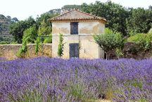 I love Provence