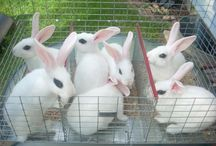 Rabbit Geek / Rabbit related pictures / by Franco Rios