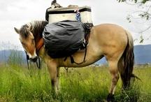 Western Montana horses  / by Missoulian