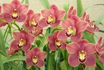 Orchids / ...