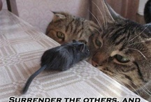 LOLpetz / Animals do the funniest things.. / by Kevin Mitnik