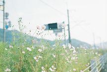 Summer Dreams ♡