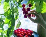 Gardening / Beautiful Gardens - #gardening #fruits #vegetables #gardens