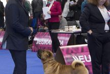 shows / photos from dog shows