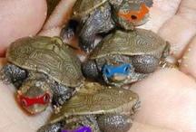 Turtles - Lara
