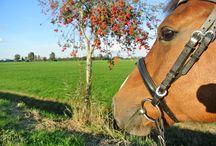 Urlaub mit Hund und Reitsport in Ostfriesland / Ob beim geführten Strand- und Wattritt oder beim Wanderritt mit dem eigenen Pferd – ein Ausritt ist eine tolle Möglichkeit Ostfrieslands Naturschönheiten kennen zu lernen. Die Reiterhöfe in der Region zeichnen sich durch ein vielfätiges Reitangebot aus, vom Ponyhof bis zum Bett und Box Betrieb. Außerdem gibt es viele Möglichkeiten die zu einem gelungenen Urlaub mit Hund beitragen: Viel Natur zum Spazierengehen, Hundestrände, Agility Parks und Museen, wo auch der Vierbeiner wilkommen ist.