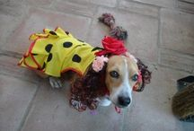 Flamenco Pets / What our pets do for us!!!!