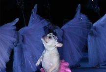 dogs and other fairies