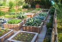 Potager en carré design / À la fois beau, esthétique, écologique et productif, le potager en carrés est une méthode de culture originale qui permet de récolter des légumes frais toute l'année sur peu d'espace