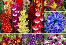 Flori / Flori de primavara si toamna