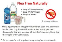 flea treatment