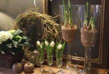 Voorjaar/Spring  / Alles wat mooi is in het voorjaar.