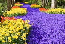 Travel - Holland / This country is down right incredible! One day we'll get to explore Holland in all its tulip-ish glory!