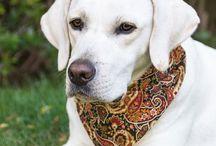 Dog Bandana / Dog Bandanas