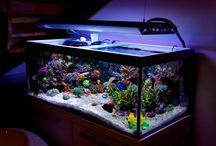 Reef aquarium stuff