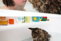 Cats love water!