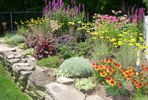Perennials/Showy Flowers