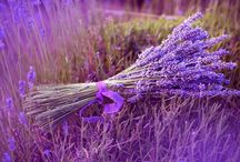 Lavender / Lavender, I love it