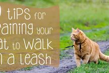 Cat Wellness Tips / Need-to-know tips about how to keep your cat in great health, as curated by our veterinary team.