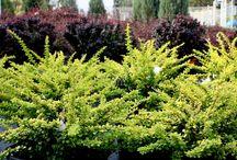 Plantings for Backyard
