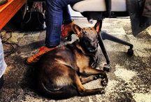 Gunner / Meet our office dog Gunner!
