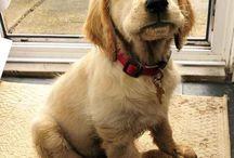 puppy stuff / by Kathleen Castellanos