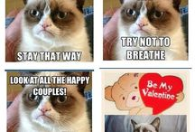 Grumpy Cat / by Summer Brewer