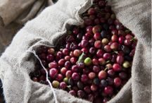 African Green Coffee Beans / African Green Coffee Beans @ Sonofresco.com