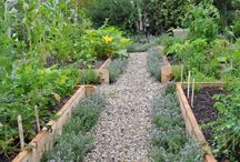 GROW YOUR OWN ORGANIC VEGETABLES