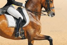 dresuur paardjes