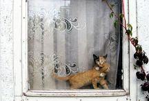 - Cat - Gatto -