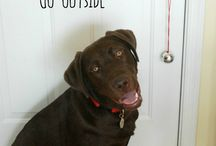Le Doge