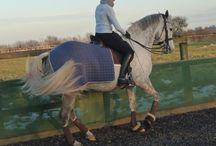 Matchy matchy horses / Horses, tack, rugs, dressage, jumping