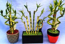 Plant & Culture